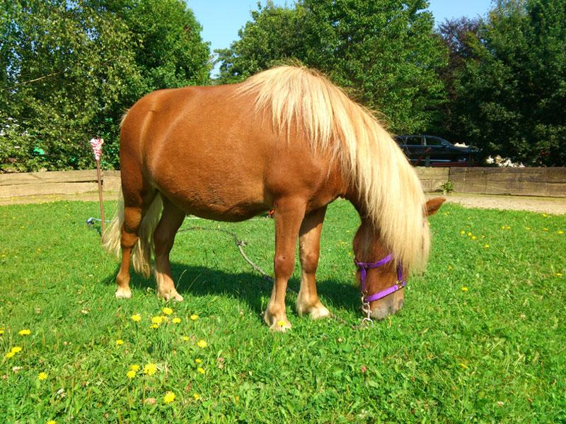 startseite lern und legasthenietraining mit pferden